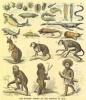 پاورپوینت حراست از تنوع ساختار ژنتیکی (فصل هفتم )از کتاب تکامل موجودات زنده